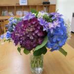 紫陽花を頂きました!